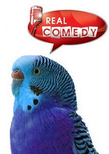 Попугай Club 2013