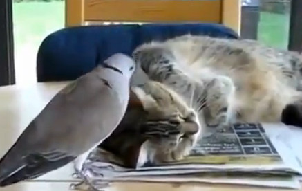 Смешные мультики про котов смотреть