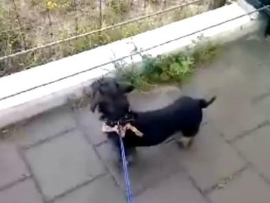 Собака мычит