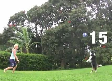 Собака видео